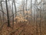 Weekend Double Header: Hike at Wildcat Mountain NaturalArea