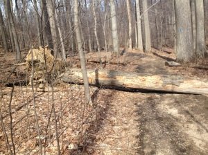 It's been a rough Winter for Sugarloaf. This tree fell on the trail. Luckily nobody was around, but unfortunately that means we'll never know if it made a sound.