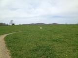 The trail bitback